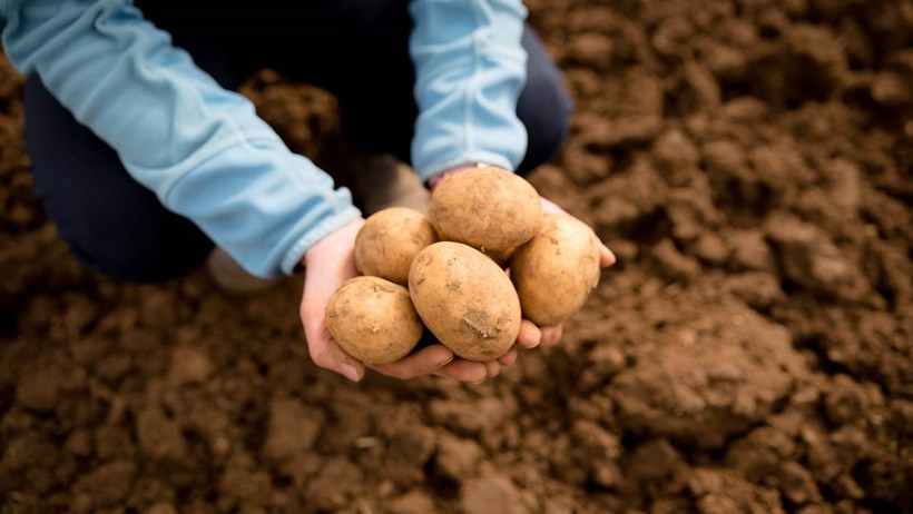 Tesco becomes the first retailer in the UK to introduce new long term contracts for potato growers and packers