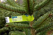 Rund 80 Prozent der Coop-Weihnachtsbäume stammen aus der Schweiz
