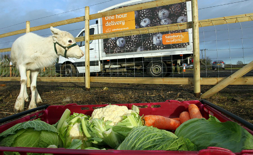 Inspired by a runaway reindeer Sainsbury's to divert bags of its leftover festive food to help feed herds of the animals across the UK