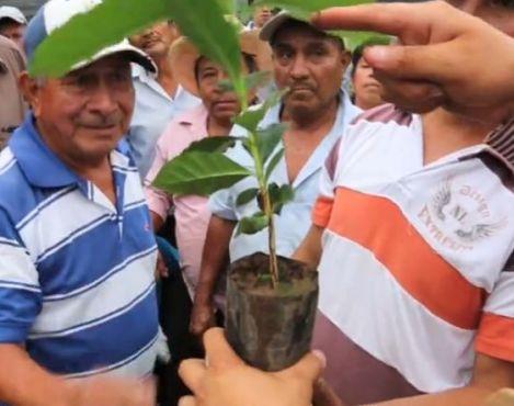 Starbucks Mexico donated over 180,000 rust resistant coffee plants to Chiapas coffee farmers through TODOS SEMBRAMOS CAFÉ program