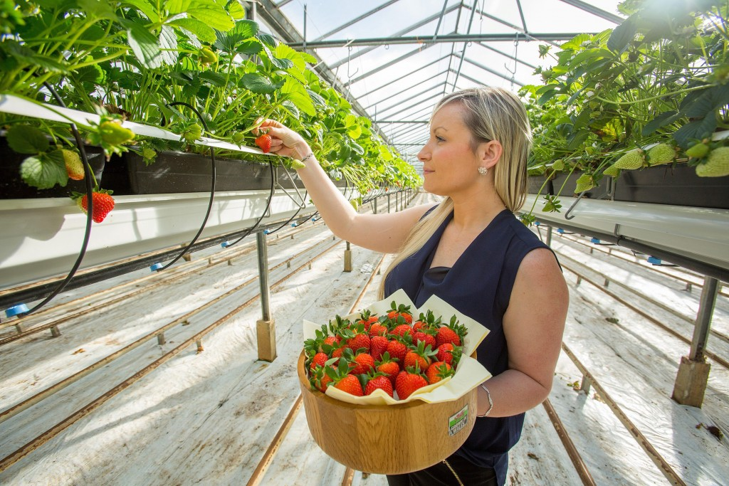 The first home grown strawberries of the year arrives at Tesco