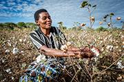 Coop Naturaline Medienreise in Tansania, Besichtigung der Bio Baumwollen Plantagen. Tag 1.  BioRe Baumwoll Produzentin Flora Manangu auf ihrem Feld in Minyanda. Bild Remo Naegeli