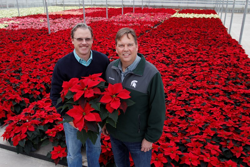 Meijer customers in Chicago, Indianapolis, Milwaukee and Louisville have the opportunity to purchase Michigan-grown poinsettias this holiday season