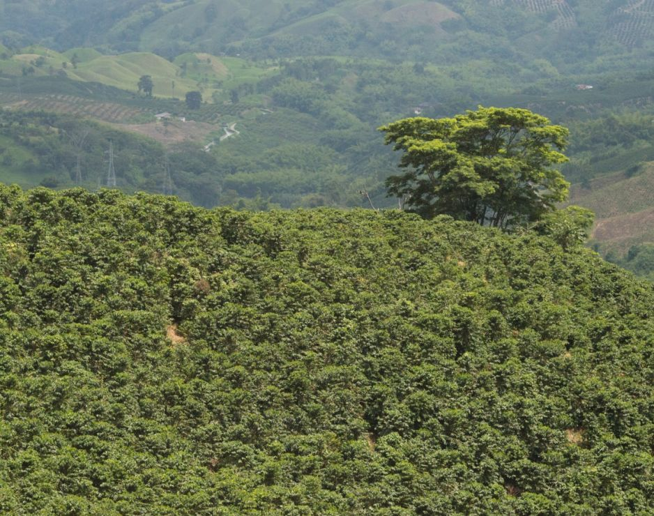 Starbucks® Nariño 70 Cold Brew Coffee: Starbucks pays tribute to the coffee growing region Nariño, Colombia
