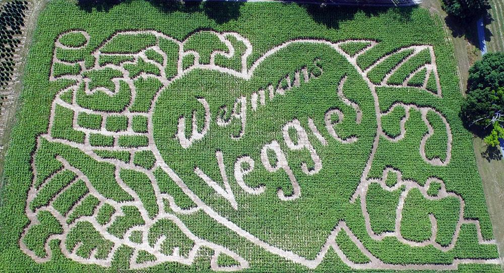 Stokoe Farms to honor Wegmans' 100th anniversary in its annual corn maze